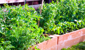 DIY Beginner Garden